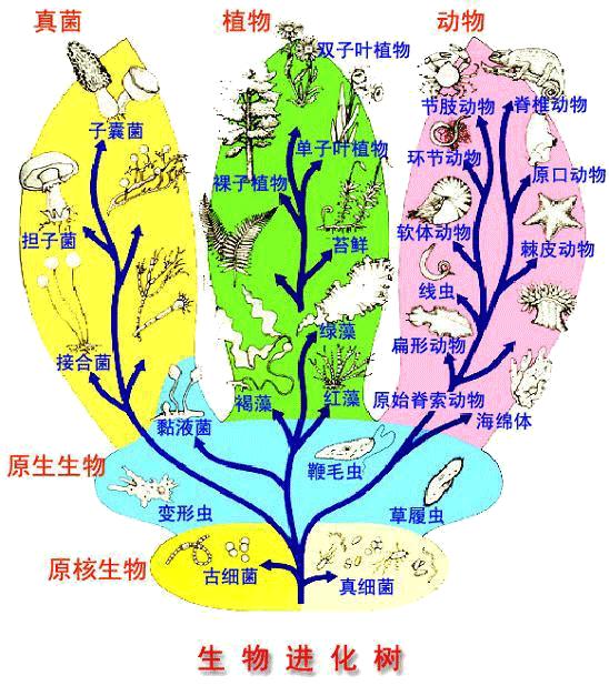 生物进化雷霆之力树